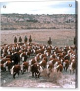 New Mexico Cattle Drive Acrylic Print