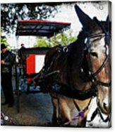 New Orleans Carriage Ride Acrylic Print