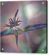 New Plant - 1 Acrylic Print