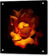 New Rose Acrylic Print