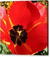 New Spring Beginnings Acrylic Print