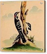 New System Of Ornithology Acrylic Print