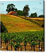 New Vineyard Acrylic Print by Gary Brandes