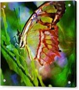 New Wings Acrylic Print