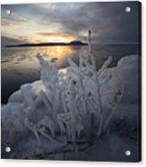 New Year's Eve, Frozen Shrub Acrylic Print