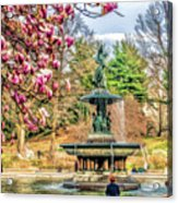 New York City Central Park Bethesda Fountain Blossoms Acrylic Print