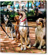 New York City Dog Walking Acrylic Print