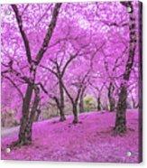 New York City Springtime Acrylic Print