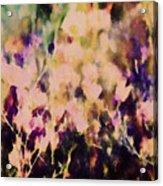 New York Wildflowers Xiii Acrylic Print