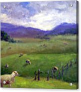 New Zealand Sheep Farm Acrylic Print