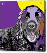 Newfie Bear Acrylic Print