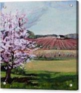 Niagara Vineyards Spring Acrylic Print