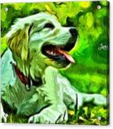 Nice Dog Acrylic Print