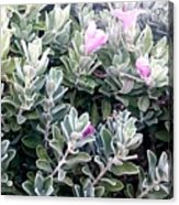 Nice Flowers  Acrylic Print