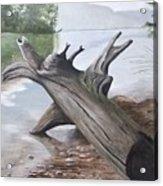 Nickajack Driftwood Acrylic Print