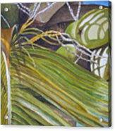 Nick's Coconuts Acrylic Print