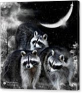 Night Bandits Acrylic Print