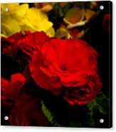 Night Begonias Five Acrylic Print