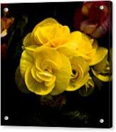 Night Begonias Four Acrylic Print