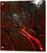 Night Blaze Acrylic Print