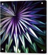 Night Bloom Acrylic Print