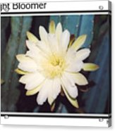 Night Bloomer Posters Acrylic Print