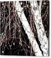 Night Branches Acrylic Print