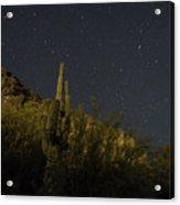 Night Cactus Acrylic Print