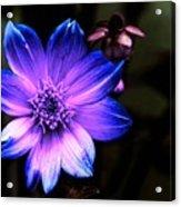 Night Flower Acrylic Print