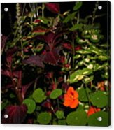 Night Flower's Acrylic Print