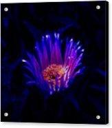 Night Glow Acrylic Print