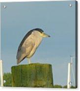 Night Heron At The Dock Acrylic Print