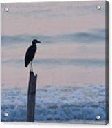 Night Heron Dawn Post Acrylic Print