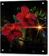 Night Hibiscus Acrylic Print