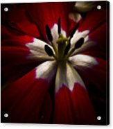 Night Lily One Acrylic Print