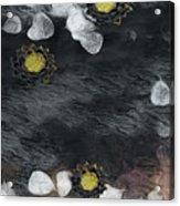 Night Lotus Acrylic Print