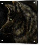 Night Silent Wolf Acrylic Print