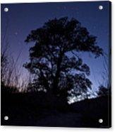 night sky and trees in Molino Canyon Mount Lemmon AZ Acrylic Print