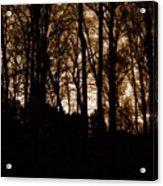 Night Trees Acrylic Print