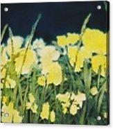 Night Watch Acrylic Print by Shirley McMahon