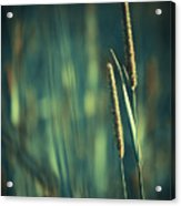 Night Whispers Acrylic Print by Aimelle