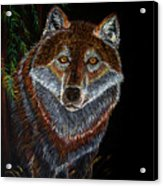 Night Wolf Acrylic Print