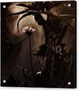 Nightflower Acrylic Print