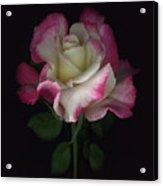 Niki's Rose Acrylic Print