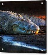 Nile Crocodile On Riverbank-1 Acrylic Print