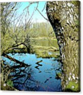 Nisqually Pond Acrylic Print