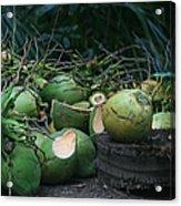 Niu Hawaiian Coconuts Hooululahui Kahekilinui Wailuku Acrylic Print
