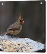 Natures Birds 53 Acrylic Print