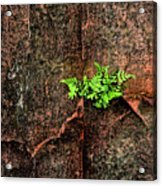 No Barriers To Growth Acrylic Print