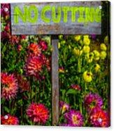 No Cutting Sign In Garden Acrylic Print